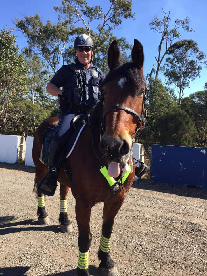 Mounted Police Show Plenty Of Horse Power At Ipswich V8 S
